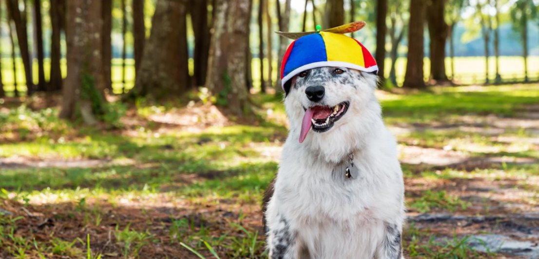 Picture of dog in helicopter hat to symbolize how easy the government makes it seem